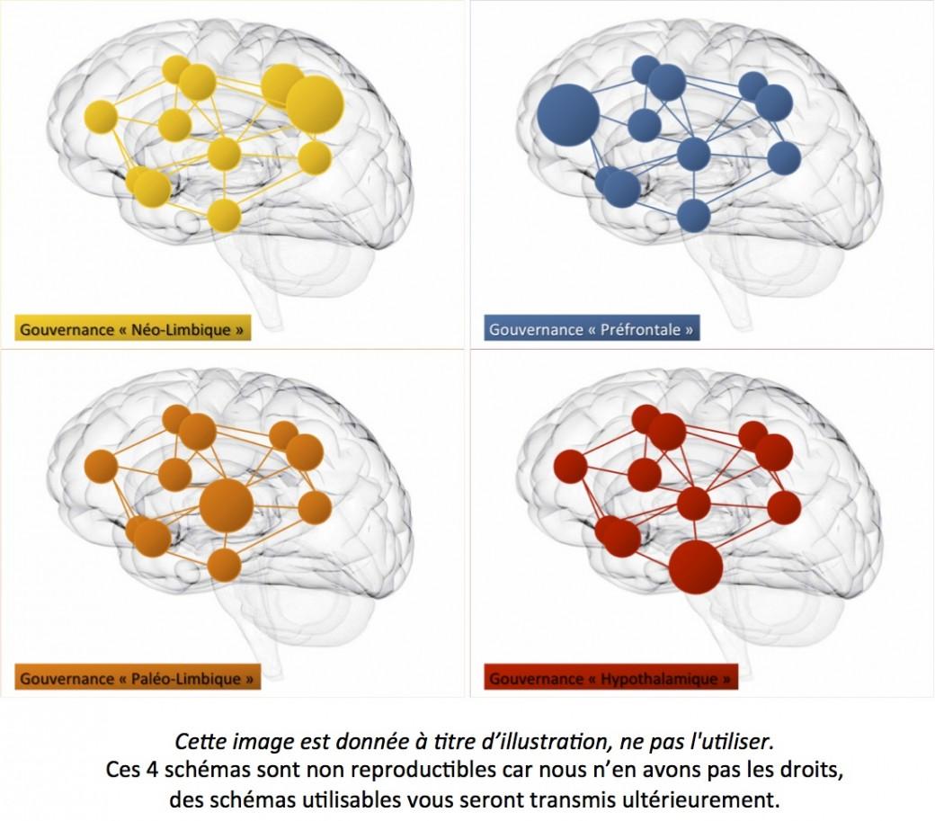 Article de Jacques Fradin dans Futura Sciences : Un nouveau modèle : les 4 cerveaux centres de décision